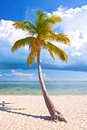 Tropical summer with palm trees at a paradise in florida keys usa blue sky clouds and crystal clear water of atlantic ocean Stock Images