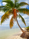 Tropical summer with palm trees at a paradise in florida keys usa blue sky clouds and crystal clear water of atlantic ocean Royalty Free Stock Image