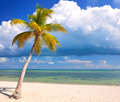 Tropical summer with palm trees at a paradise in florida keys usa blue sky clouds and crystal clear water of atlantic ocean Stock Photos