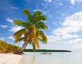 Tropical summer with palm trees at a paradise in florida keys usa blue sky clouds and crystal clear water of atlantic ocean Stock Photography