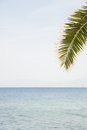 Tropical summer postcard great photo with sea and sky in defocus palm tree leaf is in foreground and in focus great for copyspace Stock Images