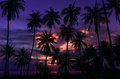 Tropical summer sunset and palms Royalty Free Stock Photo