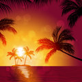 Tropical sunrise fresh nature background with palm trees and blurry lights Royalty Free Stock Photos