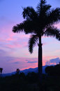 Tropical sunset backyard in mexico with palm tree and mountains Stock Photography