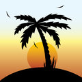 tropical sunset and palm tree. Royalty Free Stock Photo
