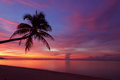 Tropical sunset with palm tree silhoette Royalty Free Stock Photo