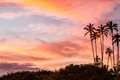 Tropical sunset palm trees Stock Photo