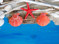 Tropical travel background with seashells and starfish Stock Photography