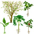 Tropical Tree Biology Lesson Digital Illustration Royalty Free Stock Photo