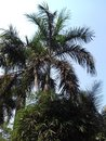 Tropical trees in the garden