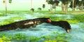 Tropical Uberabasuchus Marine Reptiles