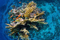 Tropical underwater life photograph of a coral reef with several different corals and small fishes shot taken from an aerial Royalty Free Stock Photos