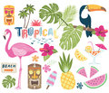 Tropical Vector Collection