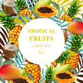 Tropical vector fruits and flowers round card. Summerl template design with palm leaves and exotic flowers Royalty Free Stock Photo