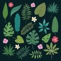 Tropical vector leaves summer green exotic jungle palm leaf tropic nature plant botanical hawaii flora illustration.