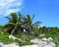 Tropical vegetation in the caribbeans mexico background with palm trees rocks and lush green foliage Royalty Free Stock Photo