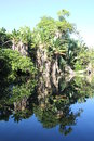 Tropical vegitation reflected in the still waters of a lake in mauritius Stock Photo