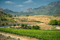 Tropical vineyards at hua hin hills thailand Stock Image