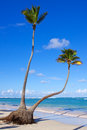 Tropical white sand beach and blue sky. Royalty Free Stock Images