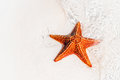 Tropical white sand with red starfish in clear water Royalty Free Stock Photo
