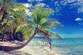 Tropical white sandy beach with palm trees. Saona Island, Dominican Republic Royalty Free Stock Photo