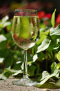 Tropical White Wine Royalty Free Stock Photo