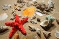 Tropische Shells und Star-fish Lizenzfreies Stockfoto