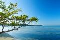 Tropische Szene des Buye Strandes in der karibischen Insel von Puerto Rico Lizenzfreies Stockbild