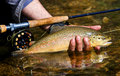 Trout Royalty Free Stock Photo
