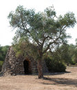 Trullo with Olive Tree Royalty Free Stock Photos