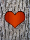 Trunk bark and love heart Royalty Free Stock Photography