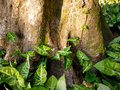 Trunk and leaves of the tree with near the root brazil Stock Photos