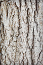 Trunk of old wood - rough bark Royalty Free Stock Photos