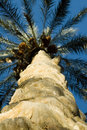 Trunk of palm tree from below Stock Images