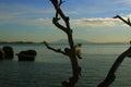 Trunk of tree, Brazilian Island