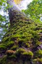 Trunk of the tree overgrown with green moss Stock Photo