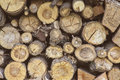 Trunks of trees put in woodpile Royalty Free Stock Photo