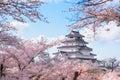 Tsuruga castle surrounded by hundreds of sakura trees Royalty Free Stock Photo
