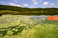 Tswaing meteorite crater reserve lake vegetation surrounding the in soshanguve sa km from Stock Photography