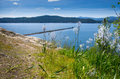 Tubbs wild flowers in the foreground with lake coeur d alene in the background on a beautiful spring day Stock Photos
