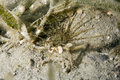 Tube anemone Stock Photo