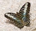 Pretty Butterfly in Tucson Royalty Free Stock Photo