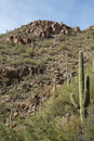 Tucson's Sabino Canyon Royalty Free Stock Photo