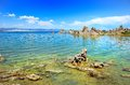Tufas at Mono Lake Royalty Free Stock Photo