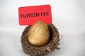 Tuition fee concept with golden egg in the bird nest Royalty Free Stock Photos