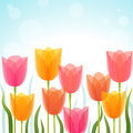 Tulip background Stock Photography