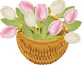 Tulip basket Royalty Free Stock Photography