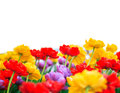 Tulip border page blank note with multi colored on bottom edge Stock Photo