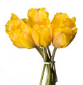 Tulip Bouquet Stock Image