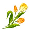 Tulip bouquet isolated over white vector illustration Stock Images